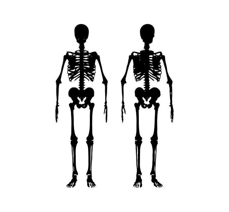 2体の骸骨